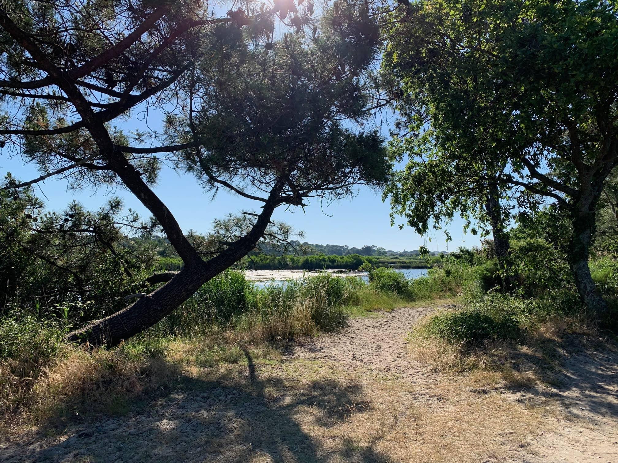 Ares Saint Brice Andernos plage