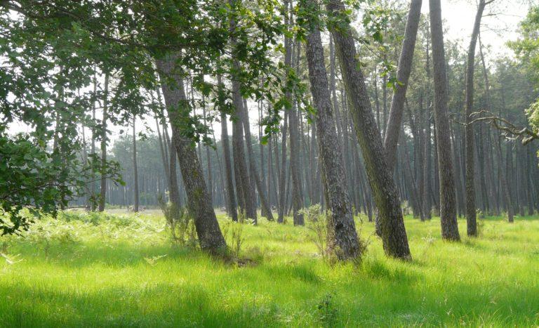 paseos en el bosque Francia Bahia de Arcachon